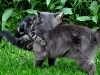 Katten & Randau