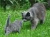 Katten & Magi