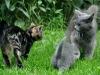Katten, Magi & Randau