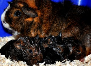 Cola med sina nyfödda bebisar!