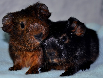 Piff & Puff nyfödda