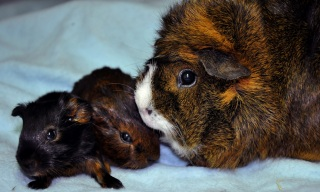 Cola med sina nyfödda ungar Piff & Puff