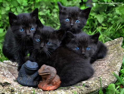 Kattungarna 4 veckor.