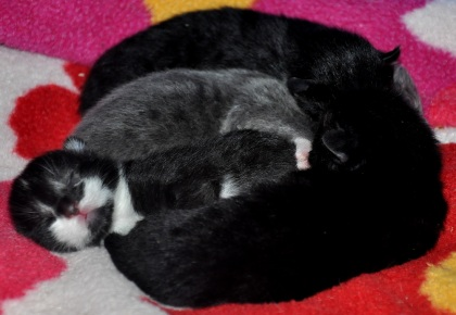 Kattungarna 1 dag unga...