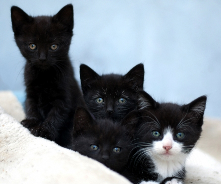Myggan, Pippi, Tant Brun & Alexander