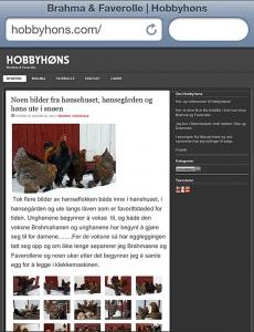 Hobbyhøns - www.hobbyhons.com