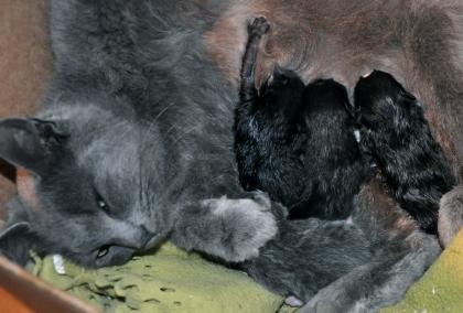 Katten med sina 4 nyfödda ungar