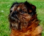 Smiley 1999-2007 Griffon Bruxellois