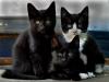 Tant Brun, Myggan & Alexander