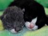 Kattungarna Nicke & Alexander