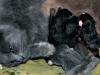 Katten med sina nyfödda kattungar 2011