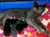 Katten med sina kattungar 2011