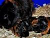 Trapp med nyfödda ungar