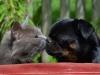 Katten & Jojo