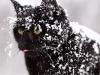 Katten Tant Brun