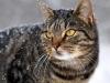 Katten Randau